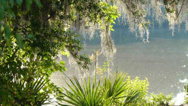 It's a great place to rent a canoe and explore a South Louisiana swamp that has plenty of...