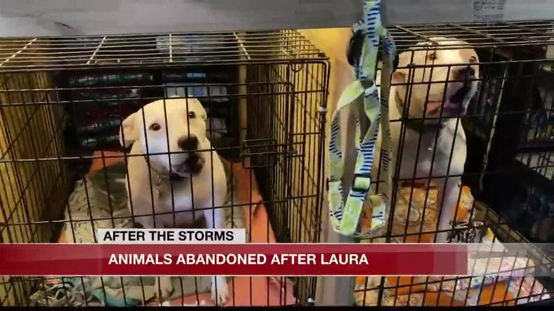 Hundreds of animals rescued after Hurricane Laura