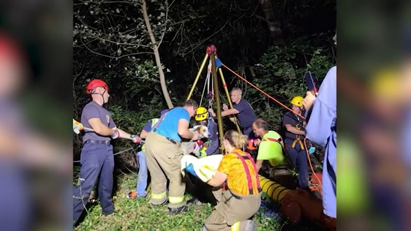 Firefighters rescued a dog that fell down a 44-foot well.