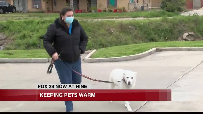 Keeping pets warm amid winter weather