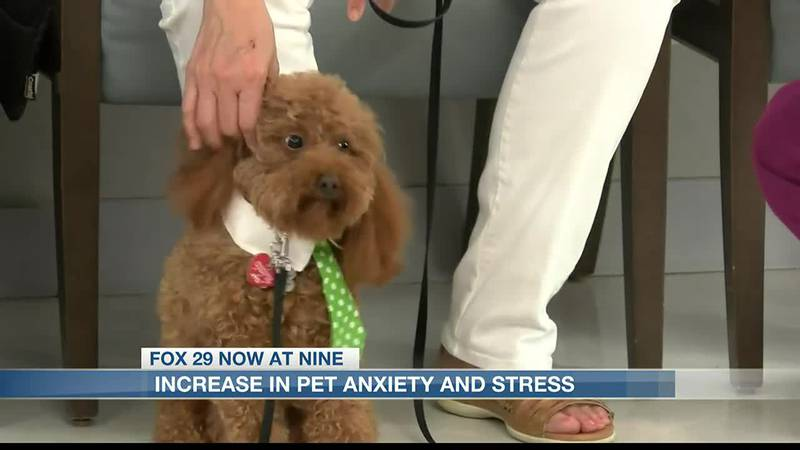 Increase in pet anxiety and stress