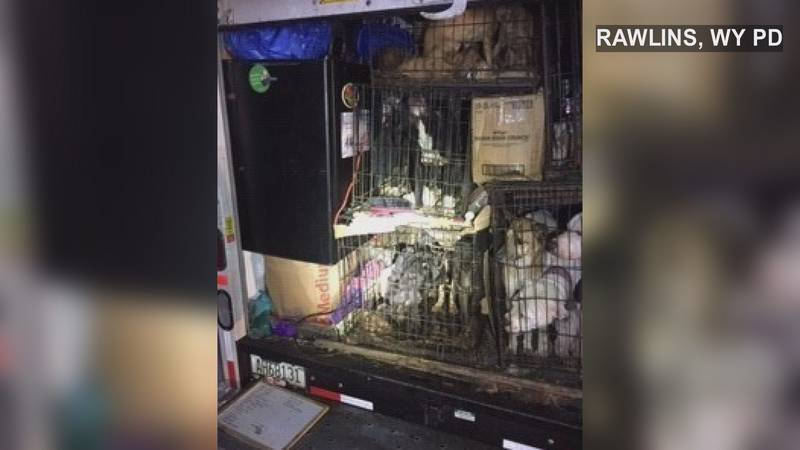 More than two dozen dogs crammed into a U-Haul, allegedly in below freezing temperatures....