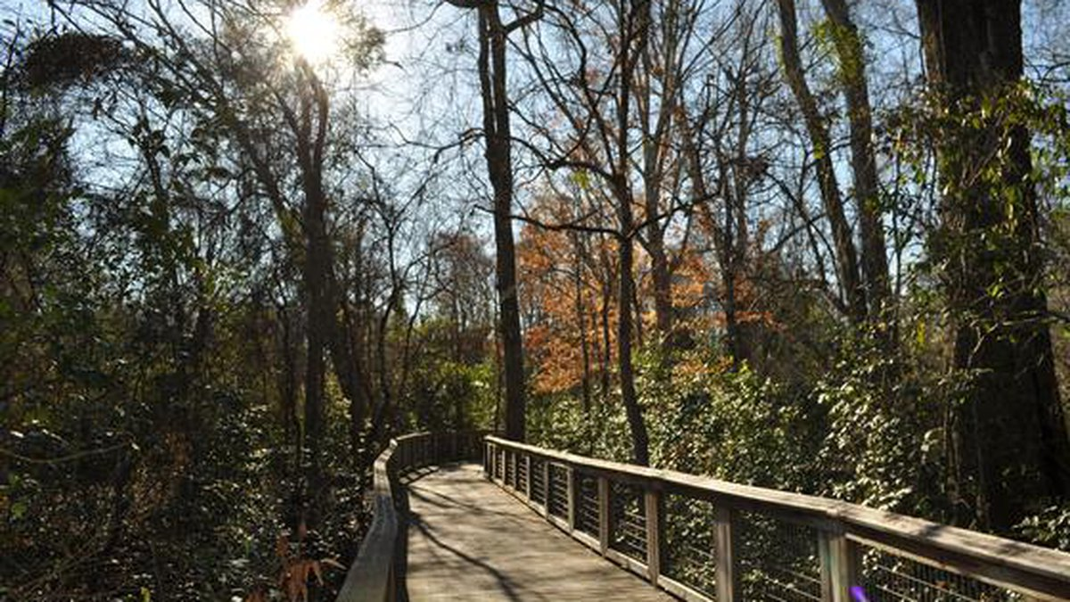 The Bluebonnet Swamp is a nature preserve hidden within the urban sprawl of Baton Rouge....